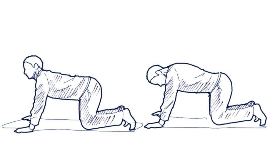 Im Vierfüßlerstand die Wirbelsäule rund machen (Katzenbuckel) und wieder strecken.